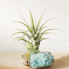 Gold Dipped Amazonite Crystal Air Planter