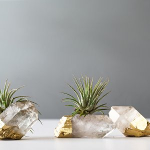 Air Friend air plant on gold dipped quartz crystal point 3 1000 g