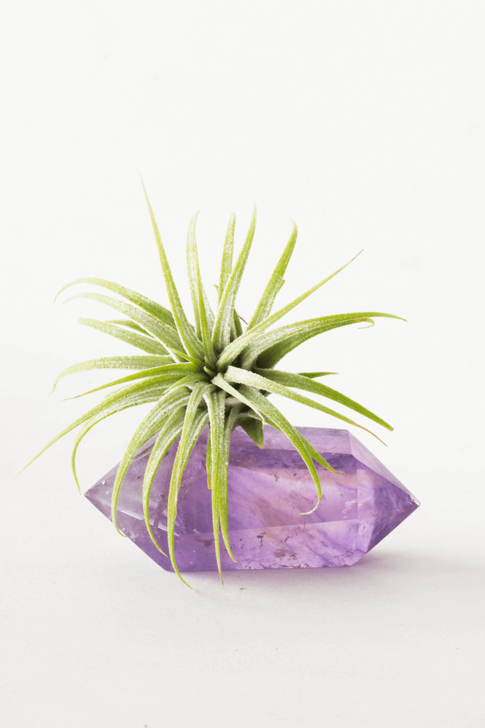 Amethyst Double Wand Air Planter
