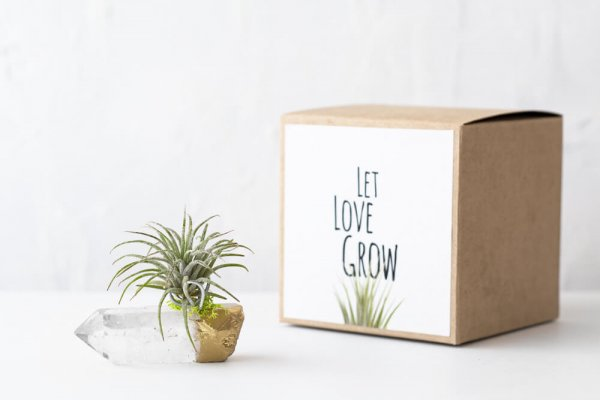 air friend let love grow long distance gold dipped crystal quartz air plant holder