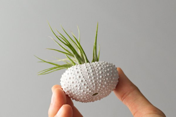 air friend set of 3 white air planter air plant jellyfish sea urchin nautical decor