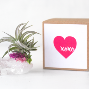 Air Friend XOXO air planter gift for best friend