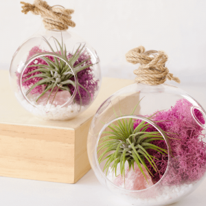 Color Air Plant Terrarium Pink