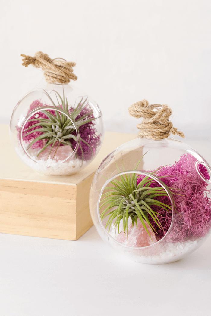Color Air Plant Terrarium Pink