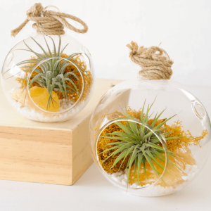 Color Air Plant Terrarium Yellow