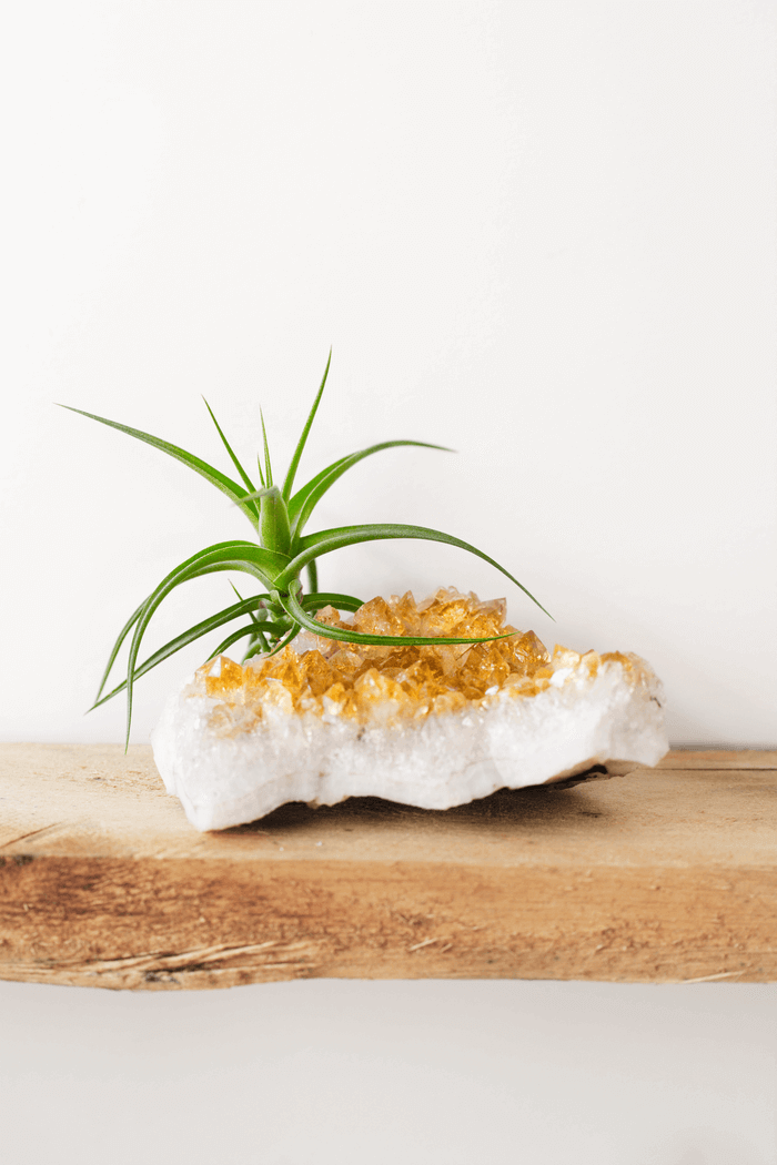 Large Citrine Air Planter on Shelf