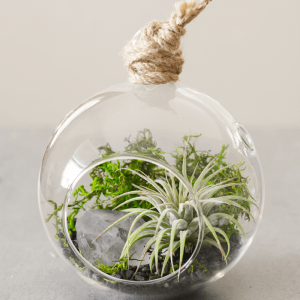 Color Air Plant Terrarium Black