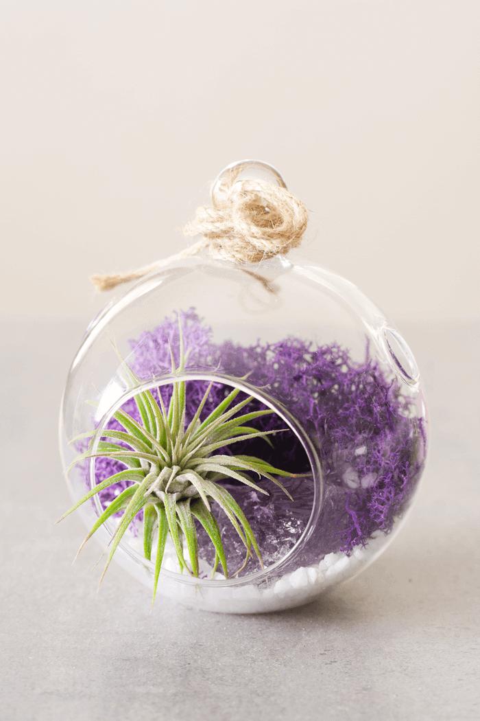 Color Air Plant Terrarium Purple