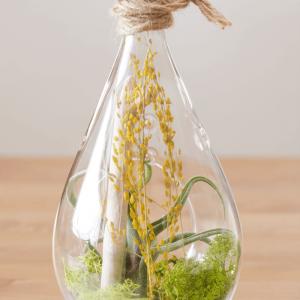 Air Plant Terrarium Tillandsia Caput Medusae