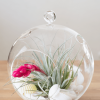 Air Plant Terrarium Houston