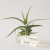 Quartz Double Wand Air Planter