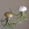 White Gold Sea Urchin Air Plant Jellyfish