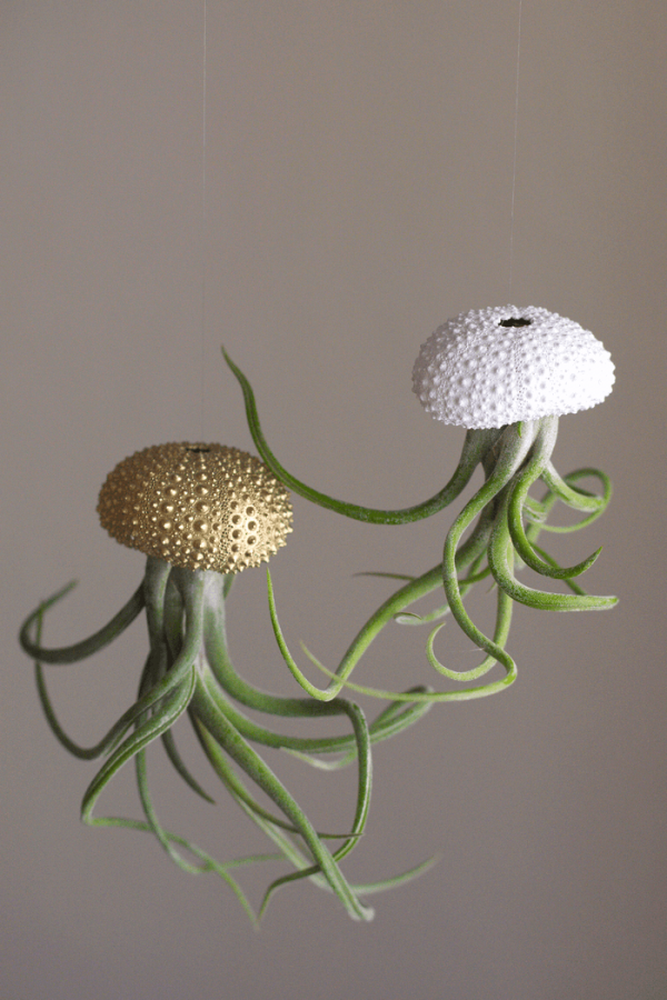 White Gold Sea Urchin Air Plant Jellyfish