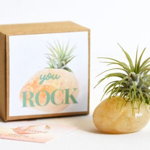 air_friend_Citrine_you_rock_air_planter