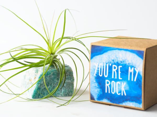 air_friend_amazonite_stricta_large_you_are_my_rock_6