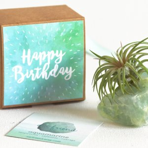 air_friend_aquamarine_happy_Birthday_air_planter_air_friend