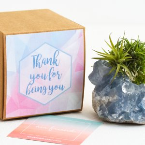 celestite_air_friend_air_planter