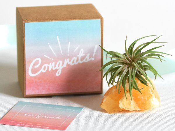 congratulations_congrats_gift_crystal_air_planter_air_friend_1