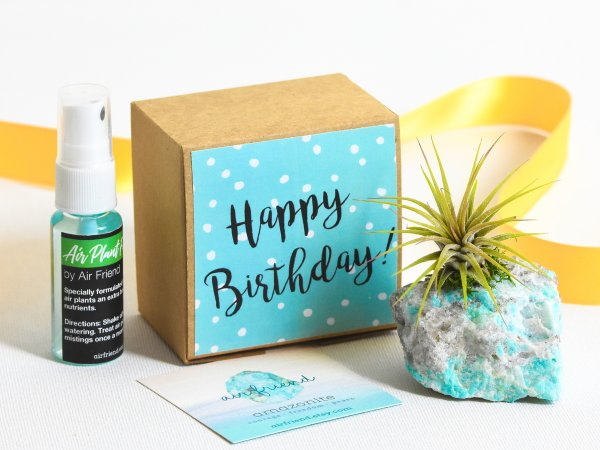 air_friend_happy_birthday_air_planter_with_air_plant_food_air_friend