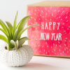 air_friend_happy_new_year_sea_urchin_air_planter_1