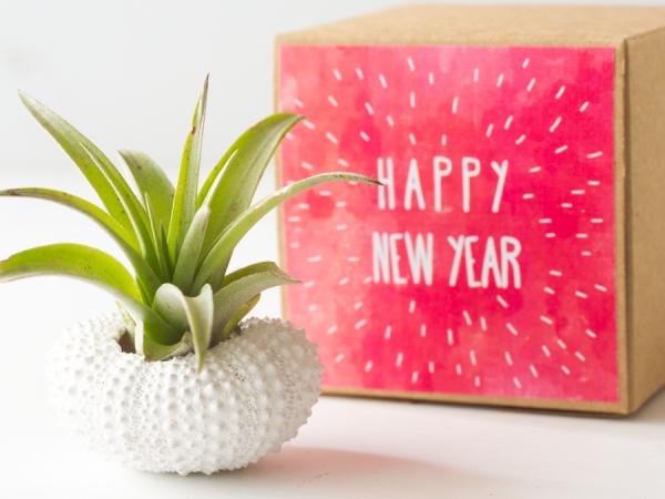 air_friend_happy_new_year_sea_urchin_air_planter_1