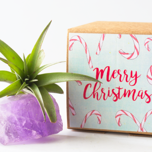 air_friend_jumbo_amethyst_merry_christmas_1