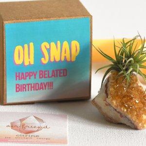 air_friend_oh_snap_happy_birthday_belated_air_planter_air_friend_1