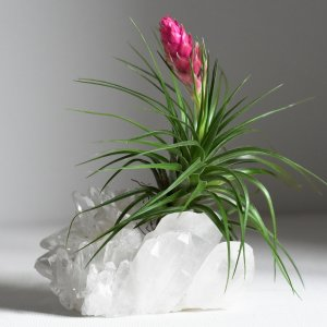 How does air plant grow on a crystal Air Friend air plant care guide