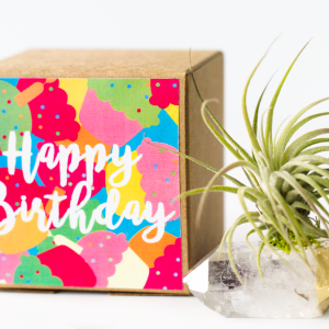 Say Happy Birthday with this crystal air planter gift from Air Friend