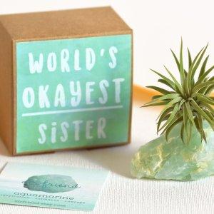 air_friend_worlds_okayest_sister_aquamarine_air_planter_air_friend_1